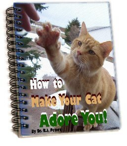 How to Make Your Cat Adore You!
