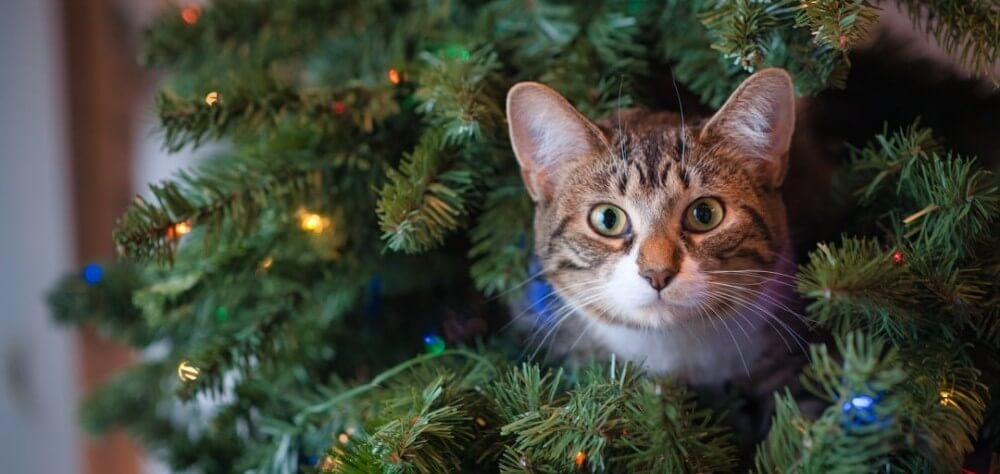 Little cat looking out from a Christmas Tree