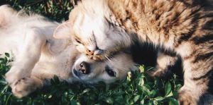 Dog and Cat showing affection outside on grass