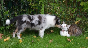 Dog and cat outside together in the foliage
