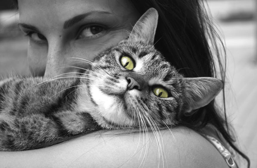 Pretty tabby cat on woman's shoulder