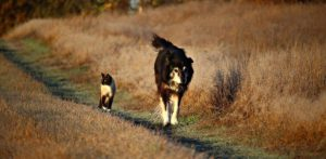 Dog and Cat Walking on a Path