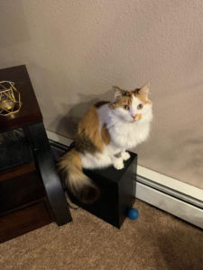 Calico Girl Sitting on Speaker