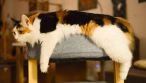 A Calico Cat Draped Over a Chair