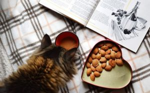 Cat Looking at Cook Book