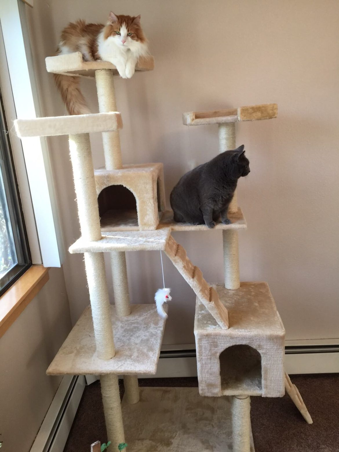 Two cats on a large cat tree